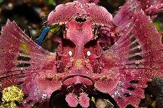 photo sous l'eau mérou