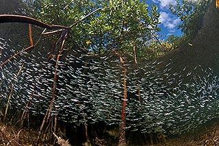 photo sous l'eau poissons