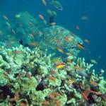 voyage thailande - koh tao plongee