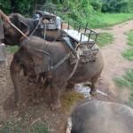 voyage thailande - balade éléphant