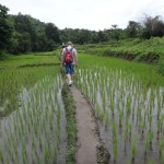 voyage thailande - rizière
