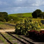 guadeloupe plantation