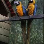 guadeloupe parc animalier