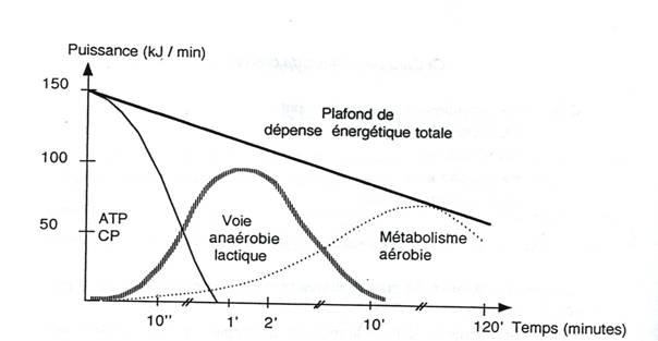 vitesse_maximale_aerobie